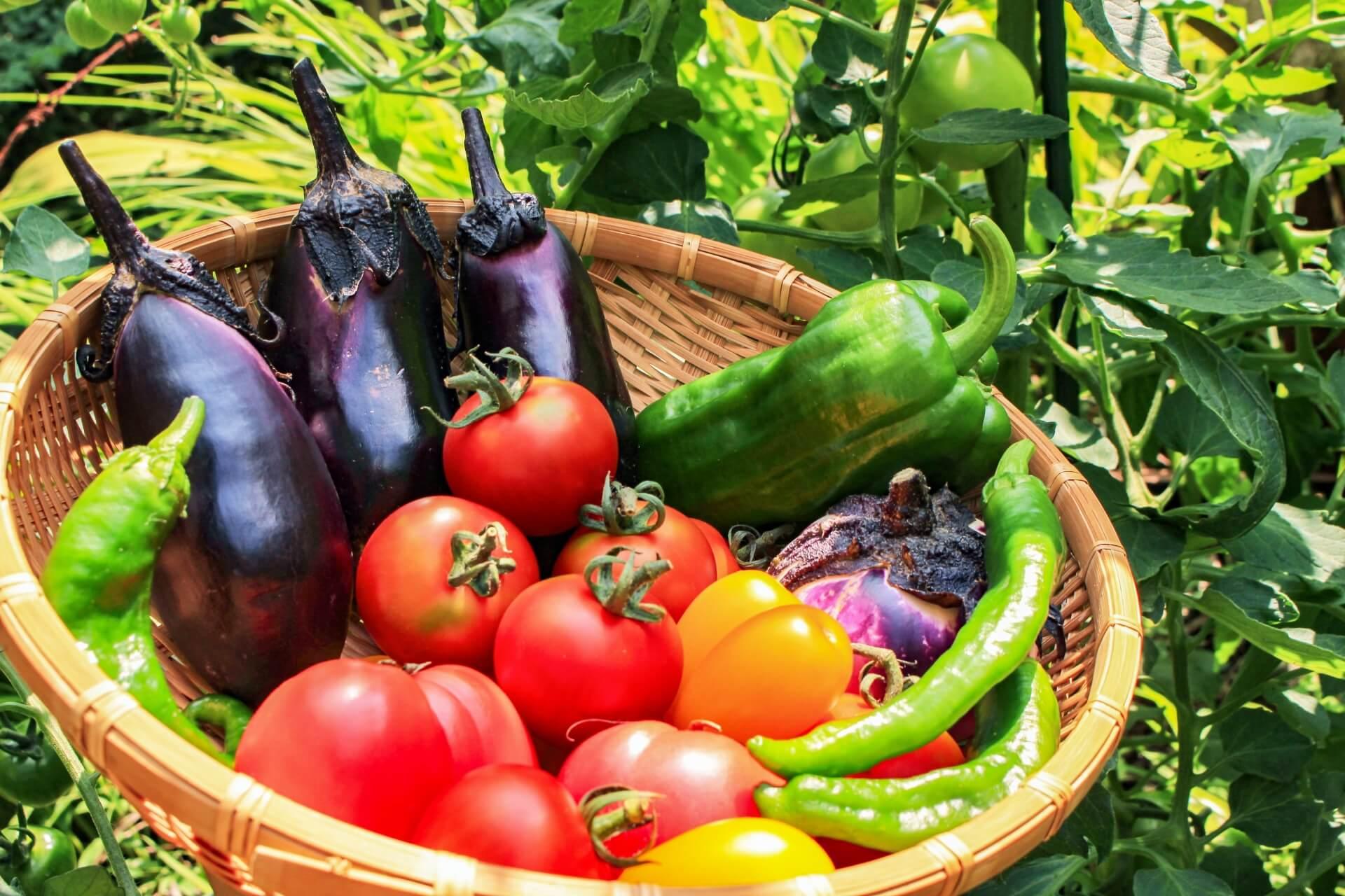 野菜ソムリエ資格 取り方